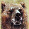 Slovenští medvědi: takto zaútočili na lidi