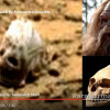 Lebka mimozemšťana na povrchu Marsu? Experti tápou