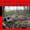 LIDSKÉ BESTIE: V ČR už letos otrávily 18 VZÁCNÝCH DRAVCŮ!