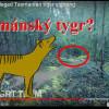 Video: NOVÉ ZÁBĚRY VYHYNULÉHO (?) TASMÁNSKÉHO TYGRA
