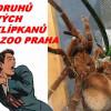 60 druhů živých sklípkanů v Zoo Praha