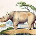 Propichuje nás, dnem i nocí, obří nosorožec?