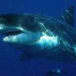 Legendární reklamy: Žralok ve Vltavě