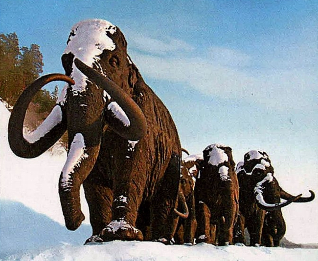 Stamp_of_Russia_2012_No_1614_Mammoths_by_A_Kovalchuk