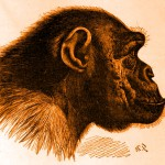 Divoký lidoop s palicí hrozil manželům v lese v Sev. Irsku