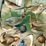 Ornitologové objevili nového ptáka – kterého už dávno znali :o)