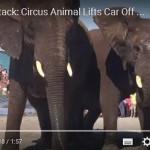 Sloni útočí! Na auta, motorky, bagry…