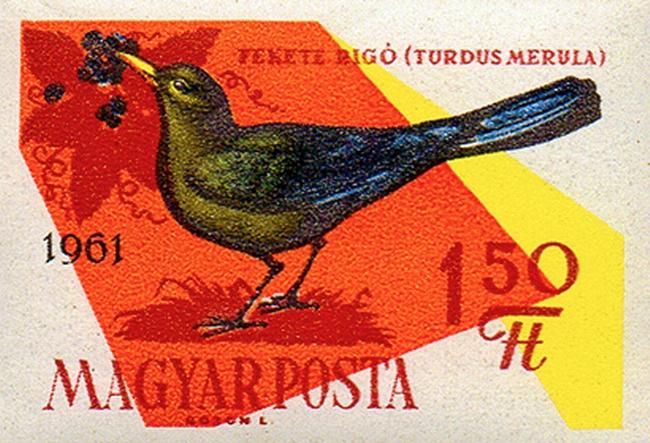 1431_Birds_150