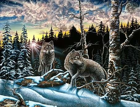 15 vlků