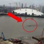 Proplula centrem Londýna ponorka? Nebo velryba?