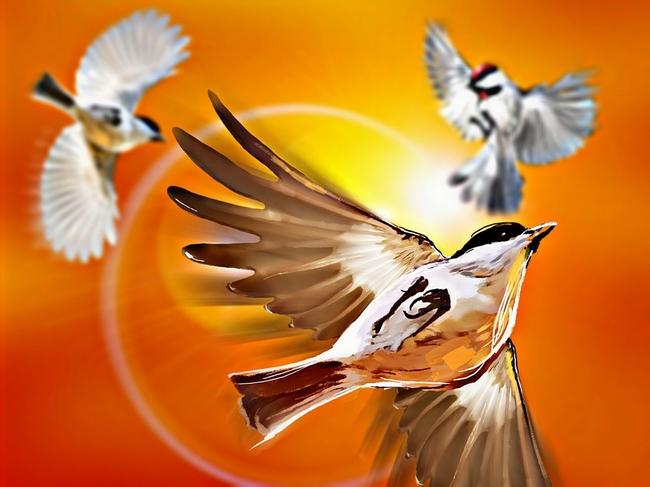 birds-1256601_960_720