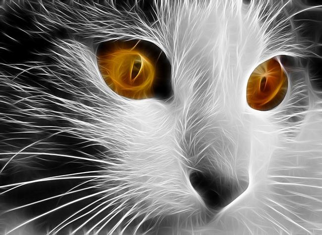 cat-648838_960_720