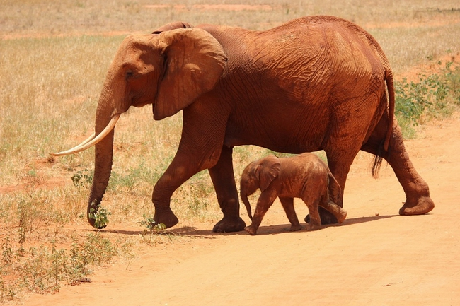 elephant-175798_960_720