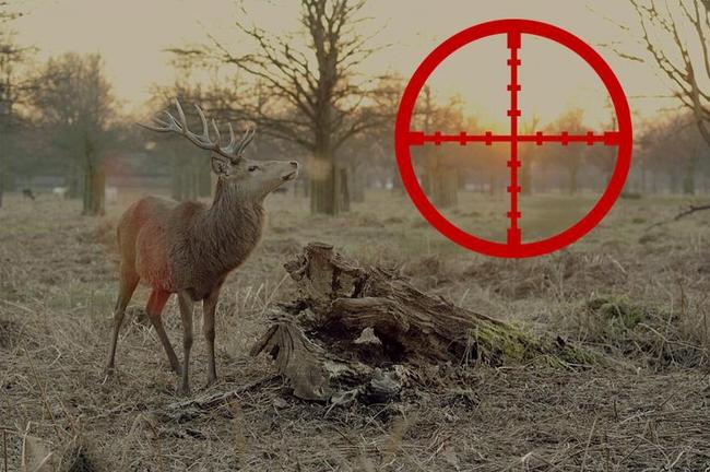 Lovci jelenů