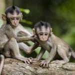 Chcete vidět opičku? Přineste do zoo žehličku