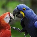 Ze ZOO Zlín uletěl vzácný papoušek. Viděli jste ho?