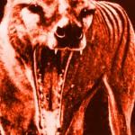 Vakovlk s liščí lebkou? Ukazuje ho Národní muzeum