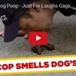 Skrytá kamera: Jak smrdí psí hovínko?
