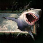 Dvojhlaví žraloci? Ano, už začali strašit vědce i plavce