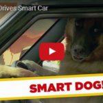 Skrytá kamera: Pes za volantem