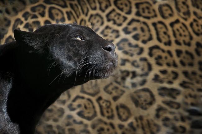 zoo-1147989_960_720