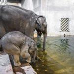 Mrkněte se do sloní koupelny v ZOO Praha… Maxík řádí, už postříkal chovatele