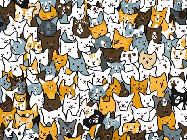 Kočky a králík