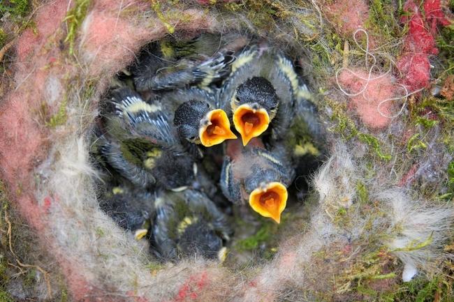 birds-nest-768779_960_720