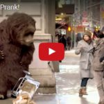 Skrytá kamera: OBROVSKÝ MEDVĚD GRIZZLY V NEW YORKU