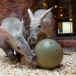 Zoo Praha chystá o víkendu Den hrabáčů a výškový rekord