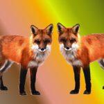 Lišky, netopýři… Seznamte se se zvířaty, která inspirovala hudební skladatele