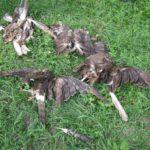 Další masakr ptačích dravců: 26 mrtvých
