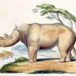 PŘED 3 LETY: Propichuje nás dnem i nocí obří nosorožec?