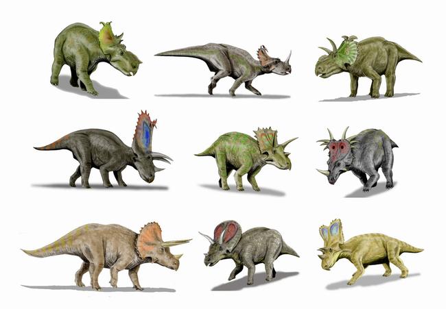Výsledek obrázku pro ceratopsidi